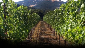 flanagan_vineyards_02-1527-600-400-90